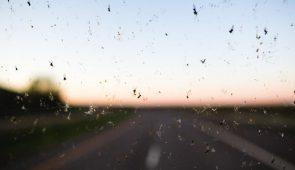 Vier gouden tips voor het verwijderen van insecten!